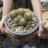 在庭院里种植一个美丽的仙人掌 免版税图库摄影