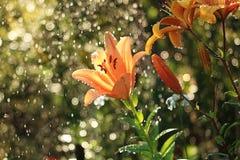 在庭院里起的Bokeh作用在雨期间 库存照片