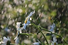 在庭院里起的Bokeh作用在雨期间 库存图片