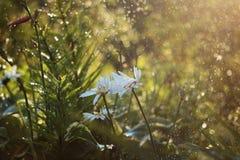 在庭院里起的Bokeh作用在雨期间 免版税库存照片