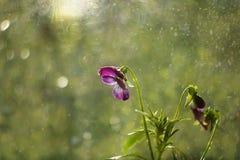 在庭院里起的Bokeh作用在雨期间 免版税库存图片