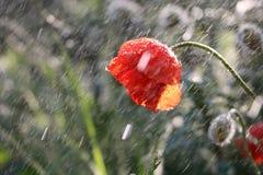 在庭院里起的Bokeh作用在雨期间 免版税图库摄影