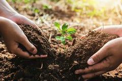 在庭院里递帮助的mater和的孩子种植小树 浓缩 免版税库存照片
