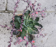 在庭院里,仙人掌喜欢植物 免版税库存图片