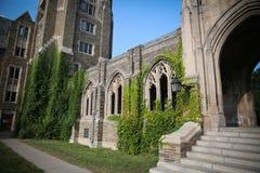 在康乃尔大学的常春藤 库存图片