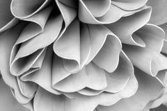 在建筑学的抽象线 现代结构的详细资料 Refi 免版税库存照片