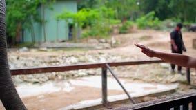 在开放动物园、人有人力推进大象的玉米,香蕉和青豆里 影视素材