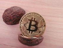 在开放坚果壳的Bitcoin 免版税库存图片