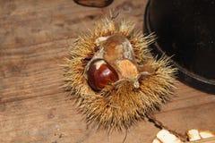 在开放壳的栗子在木桌上 库存照片
