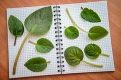 在开放笔记本的绿色叶子 免版税库存图片