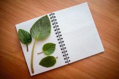 在开放笔记本的绿色叶子 免版税图库摄影