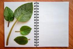 在开放笔记本的绿色叶子 库存图片