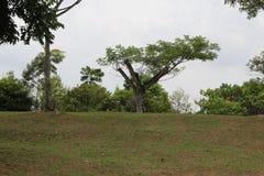 在开放领域的树 图库摄影