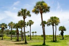 在开放领域的疏散棕榈树由海 库存图片