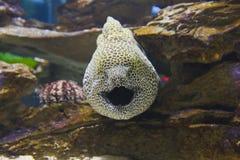 在开普敦,在岩石之间的五颜六色的鱼 免版税库存图片