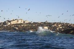 在开普敦,飞行到海滩的数百鸟 免版税库存照片