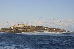 在开普敦,鸟飞行狂放在海滩 库存照片
