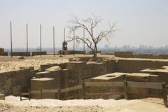 在开罗城堡前面的停止的老结构树 免版税图库摄影