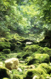 在开胃菜,法国的绿色河床 免版税库存照片