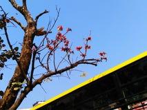在开花在太阳下的早晨花的树 免版税库存照片