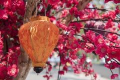 在开花树的灯笼 库存照片