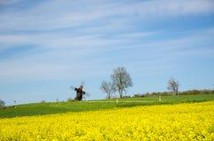 在开花油菜籽领域的老风车 免版税库存图片