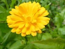 在开花的五颜六色的狂放的草甸花 库存照片