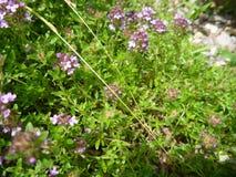 在开花的五颜六色的狂放的草甸花 免版税图库摄影