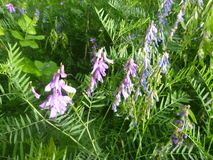 在开花的五颜六色的狂放的草甸花 免版税库存照片