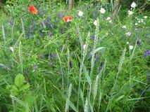 在开花的五颜六色的狂放的草甸花 免版税库存图片