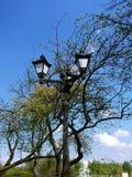 在开花的分支中的葡萄酒街灯 库存照片