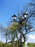 在开花的分支中的葡萄酒街灯 免版税库存图片