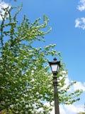 在开花的分支中的葡萄酒街灯 免版税库存照片
