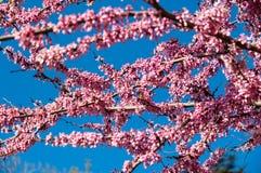 在开花的春天 免版税库存照片
