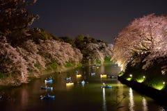 在开花的樱桃树附近的划船 免版税库存照片
