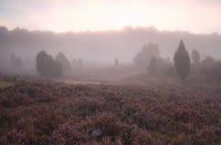 在开花的石南花小山的有薄雾的日出 库存照片