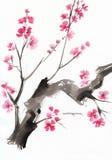 在开花的结构树 免版税库存照片