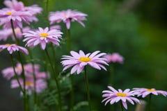 在开花的美丽的花 免版税库存图片