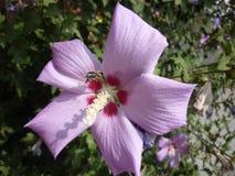 在开花的自然 库存照片