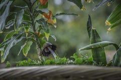 在开花的花下的森林蘑菇 图库摄影