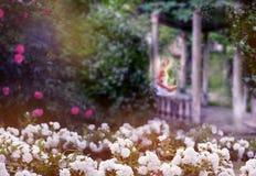 在开花的茉莉花和白玫瑰蓬松绽放丛林的老被破坏的眺望台  一个女孩的剪影有一本书的在 免版税库存照片