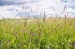 在开花的草甸的明亮的夏日 免版税图库摄影