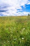 在开花的草甸的明亮的夏日 库存图片