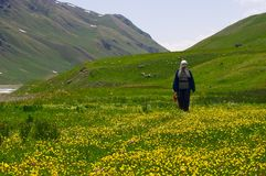 在开花的草甸间 免版税库存照片