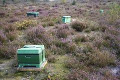 在开花的荒地的蜂箱在荷兰 库存图片