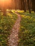 在开花的绿色春天森林,自然背景里落后 库存图片