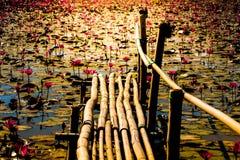 在开花莲花领域或庭院的史诗竹桥梁 库存照片
