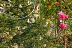 在开花附近的装饰的圣诞树在街道上上升了在地中海村庄 图库摄影