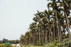 在异乎寻常的海岛上的热带棕榈树森林 免版税库存照片