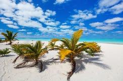 在异乎寻常的海岛的惊人的热带海滩太平洋的 免版税图库摄影